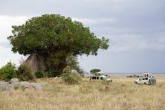 Dżipy w Serengeti Zdjęcia Royalty Free
