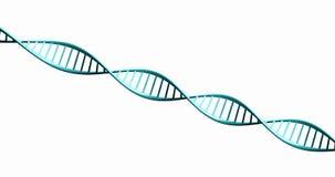 3d isolati rendono il modello della catena torta del DNA. Immagini Stock Libere da Diritti