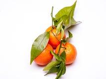 D'isolement trois mandarines avec les feuilles vertes Images libres de droits