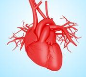 3d istoty ludzkiej serce Zdjęcie Stock