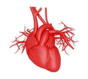 3d istoty ludzkiej serce Fotografia Stock