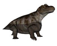 3D Keratocephalusdinosaurus - geef terug Stock Foto