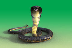3d King cobra. Snake  on green background Royalty Free Stock Image