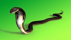 3d King Cobra The world`s longest venomous snake  on green background, King cobra snake 3d illustration, King cobra snake. 3d Rendering Stock Image