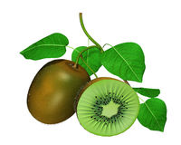 3D Kiwi Model Stock Photos