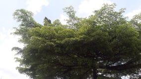3d kolorowy pojęcia drzewa parasol Fotografia Stock