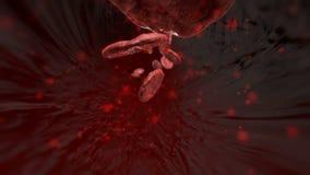 3D komórki krwi podróżuje przez żyły Wśrodku ludzkiego naczynia krwionośnego naukowej animaci Krwionośny otrucie zbiory