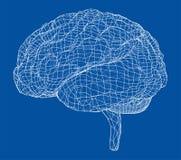 3D konturu mózg Wektorowy rendering 3d royalty ilustracja