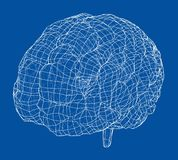 3D konturu mózg Wektorowy rendering 3d ilustracji