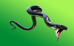 3d konung Cobra Black Snake världs`en s länge Arkivbilder