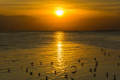 3 d krajobrazu panoramy morza słońca składu projekta elementu natury raj Zdjęcia Stock