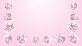 3D kwitnienia menchii róże obramiają, Połyskują, tło zbiory wideo