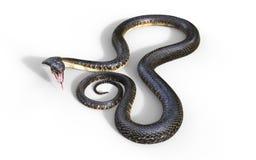 3d la serpiente venenosa más larga del ` s del rey Cobra The World Foto de archivo