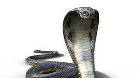 3d la serpiente venenosa más larga del ` s del rey Cobra The World
