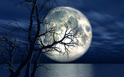 3D landscape background with moon and tree. 3D landscape background with moon over the sea with dead tree Stock Image