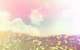 3D landscape of buttercups and daisies with retro effect Royalty Free Stock Photography