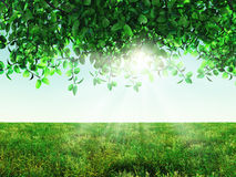 3D landscape with leaves and meadow. 3D render of sunlight shining through leaves and a field of grass Stock Photo