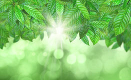 3D Leaves against a defocussed background Royalty Free Stock Photo