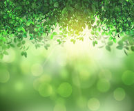 3D leaves and sunlight Stock Images