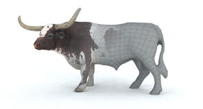3d longhorn bull render. A 3d rendering of a longhorn bull Royalty Free Stock Photo