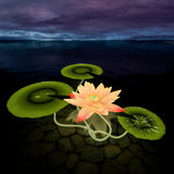 3d lotus. Lotus 3d rendering in background abstract Stock Photography