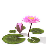 3d lotus. Lotus 3d rendering in background abstract Stock Images