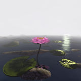 3d lotus. Lotus 3d rendering in background abstract Royalty Free Stock Photography