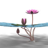 3d lotus. Lotus 3d rendering in background abstract Stock Image
