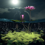 3d lotus. Lotus 3d rendering in background abstract Royalty Free Stock Photos