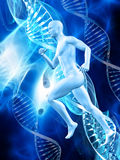 3D male figure on medical DNA background. 3D male figure on a medical background with DNA strands Royalty Free Stock Photo