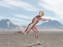 3D male figure with muscle map running in landscape royalty free illustration