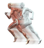 3D male figures running. 3D render of male figures running with skin and muscle map Stock Photos