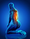 3D male medical figure with spine highlighted in kneeling positi. 3D render of a male medical figure with spine highlighted in kneeling position Stock Photo