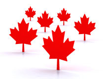3d maple leafs. Maple leafs canadian symbol, 3d illustration Stock Images