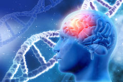 3D medical background with brain and DNA strands Stock Photography