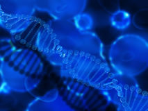 3D medical background with clear DNA strands Stock Image
