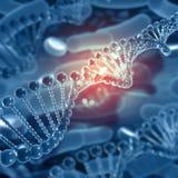 3D medical background with DNA strands. 3D render of a medical background with DNA strands Stock Photography