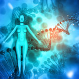 3D Medical background with female figure on DNA strands Stock Photos