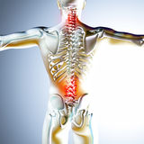 3d medical illustration showing back pain Royalty Free Stock Images