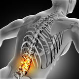 3D medical image of male with lower spine highlighted Stock Photos