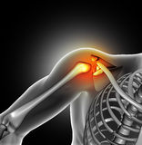 3D medical image of shoulder bone Royalty Free Stock Photo