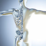 3d medical male figure  with skeleton Stock Photography