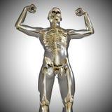 3d medical male skeleton Royalty Free Stock Image