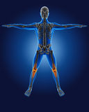 3D medical man with skeleton Royalty Free Stock Photos