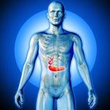 3D medisch beeld van een mannelijk benadrukt cijfer met gal stock illustratie