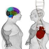3D medische achtergrond met DNA-bundels en het model van het draad menselijke lichaam stock illustratie