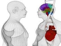 3D medische achtergrond met DNA-bundels en het model van het draad menselijke lichaam royalty-vrije illustratie