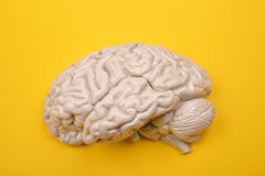 3D menselijk hersenenmodel van extern op gele achtergrond Royalty-vrije Stock Afbeeldingen