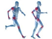 3D menselijke geïsoleerde anatomie van de mensenpijn Stock Afbeeldingen