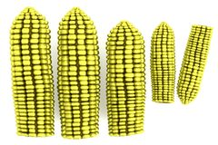 3d model of corns Royalty Free Stock Image